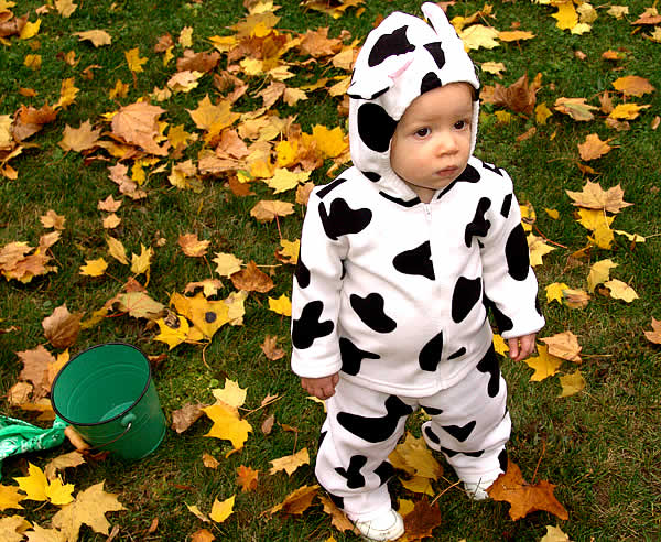 Halloween: The Little Cow